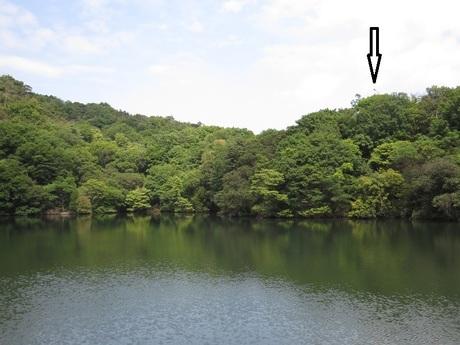 トビ 160515 和田山 (3).JPG
